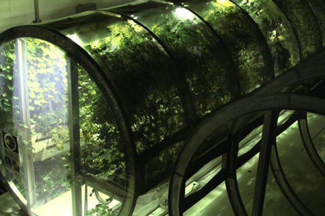 Lunar, Martian Greenhouse Designed to Mimic Earth - Jaime Bonett
